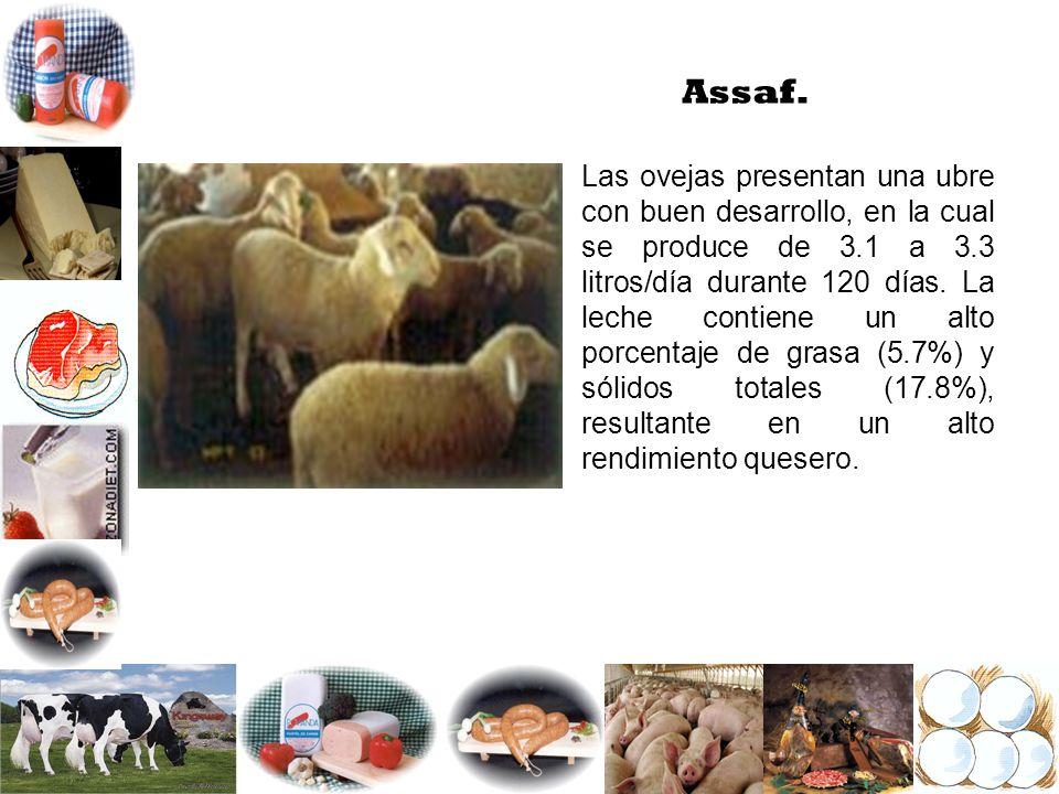 Assaf.