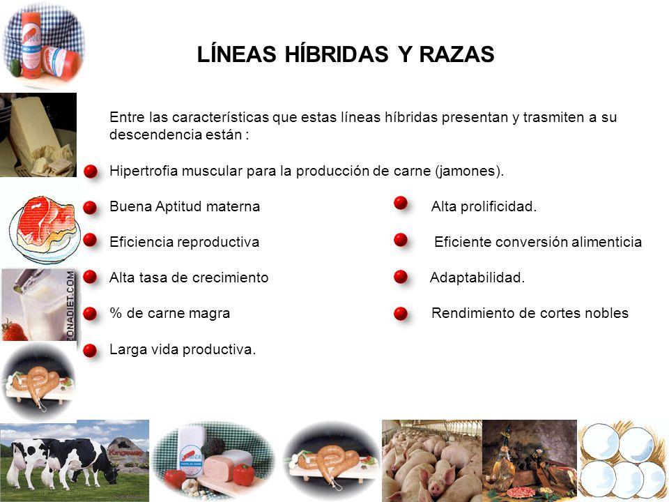 LÍNEAS HÍBRIDAS Y RAZAS