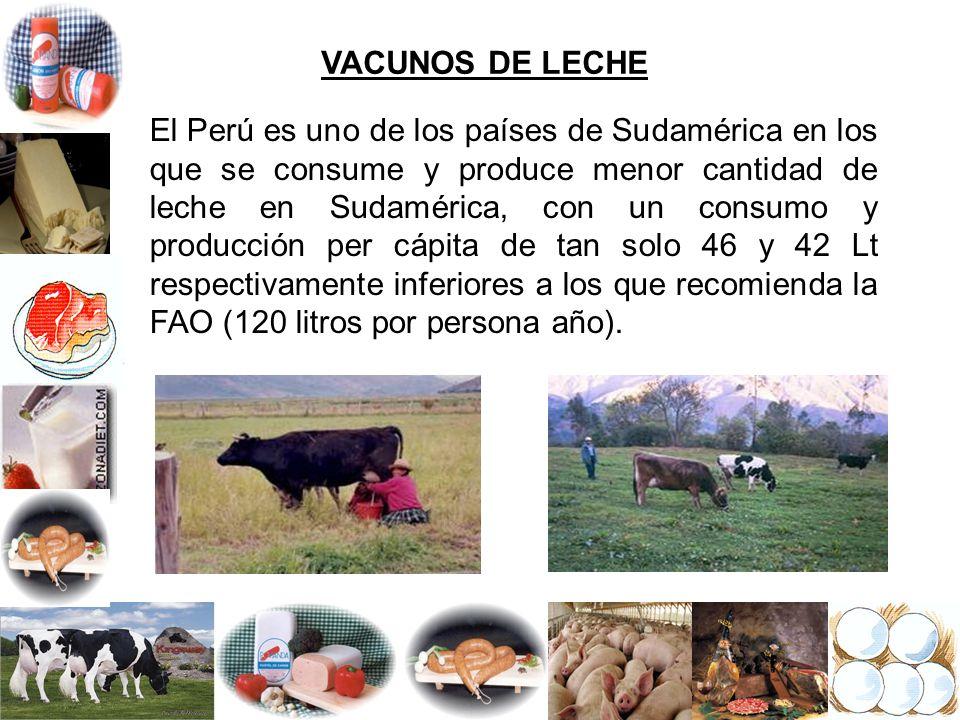 VACUNOS DE LECHE