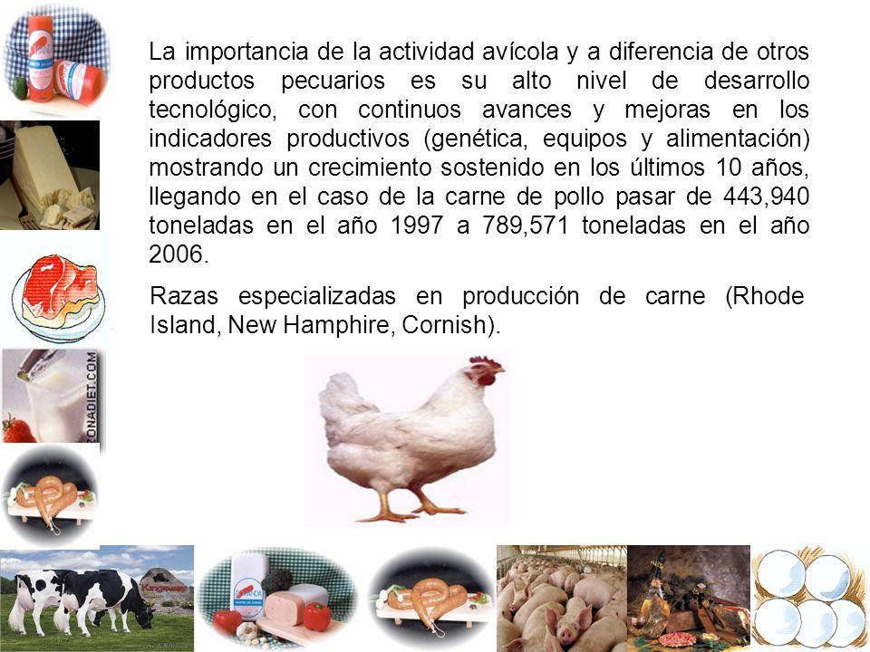 La importancia de la actividad avícola y a diferencia de otros productos pecuarios es su alto nivel de desarrollo tecnológico, con continuos avances y mejoras en los indicadores productivos (genética, equipos y alimentación) mostrando un crecimiento sostenido en los últimos 10 años, llegando en el caso de la carne de pollo pasar de 443,940 toneladas en el año 1997 a 789,571 toneladas en el año 2006.