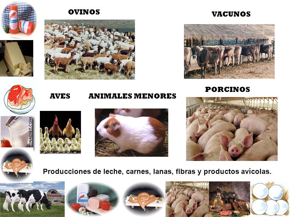 OVINOS VACUNOS. PORCINOS. AVES. ANIMALES MENORES.