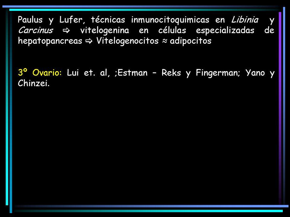 Paulus y Lufer, técnicas inmunocitoquimicas en Libinia y Carcinus  vitelogenina en células especializadas de hepatopancreas  Vitelogenocitos ≈ adipocitos