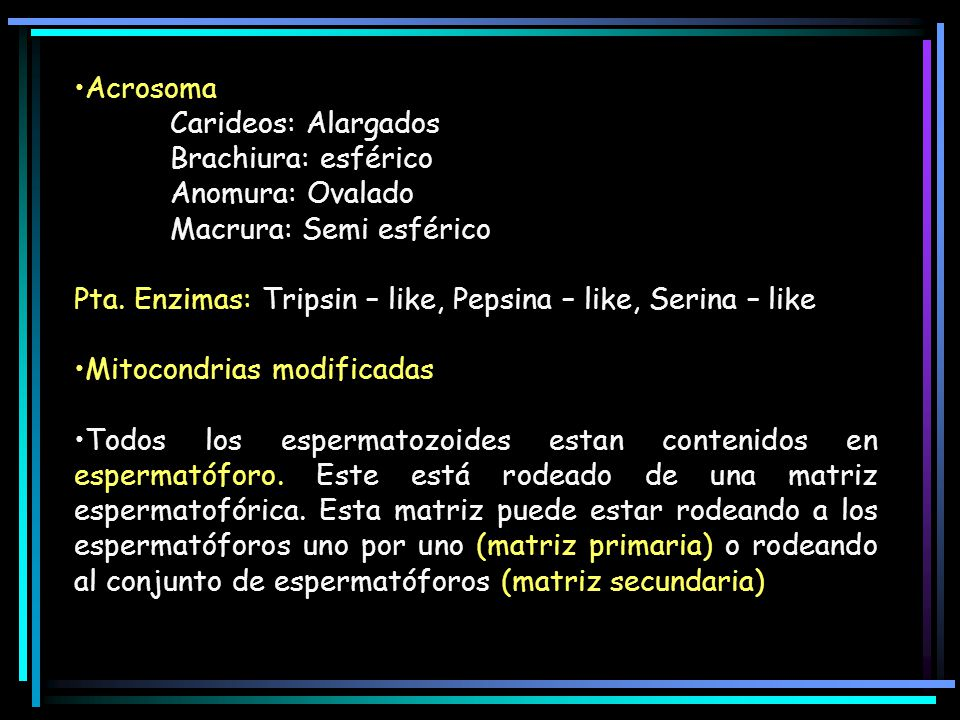 Acrosoma Carideos: Alargados. Brachiura: esférico. Anomura: Ovalado. Macrura: Semi esférico.