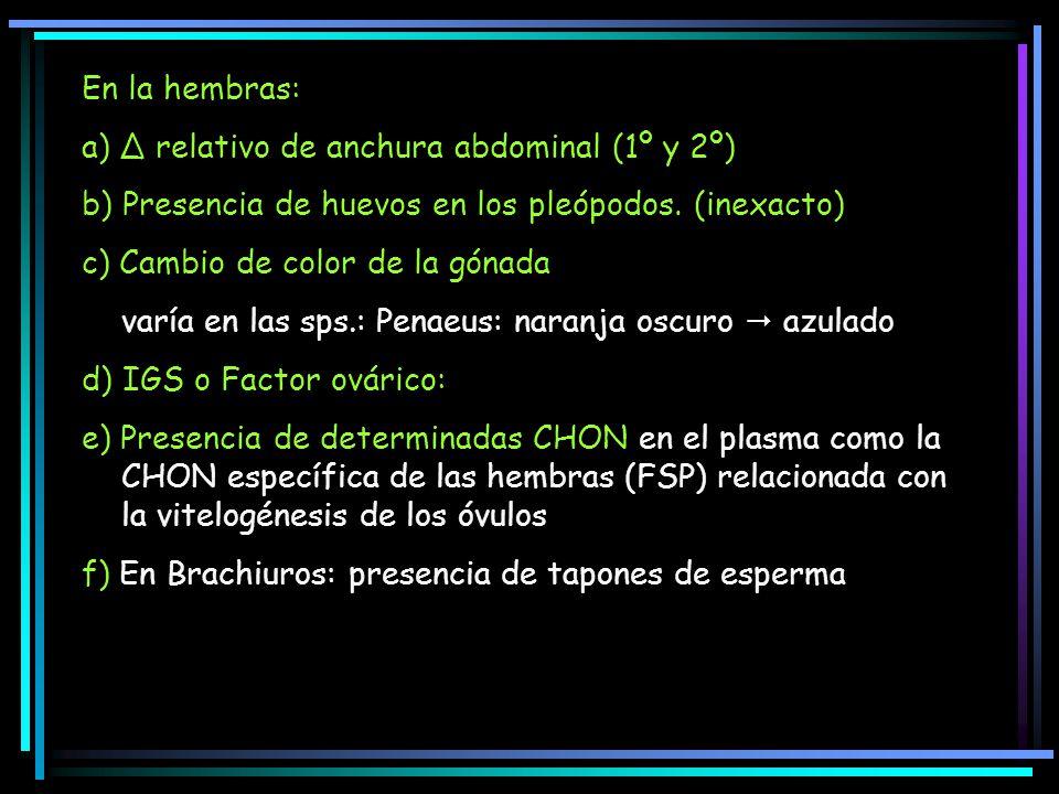 En la hembras: a) Δ relativo de anchura abdominal (1º y 2º) b) Presencia de huevos en los pleópodos. (inexacto)