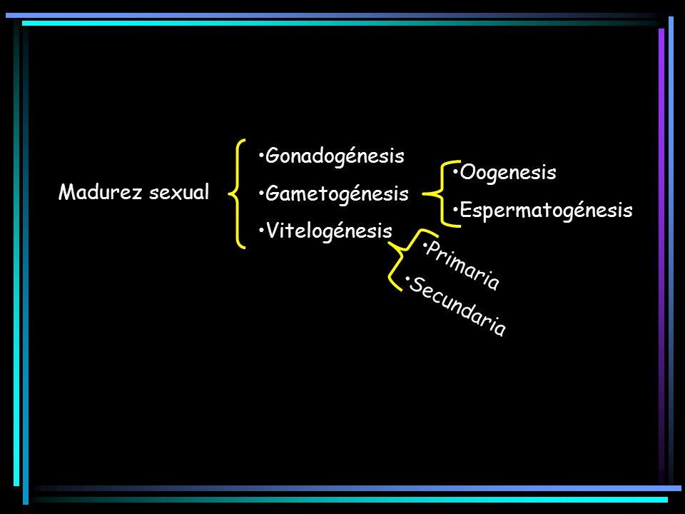Gonadogénesis Gametogénesis. Vitelogénesis. Oogenesis. Espermatogénesis. Madurez sexual. Primaria.