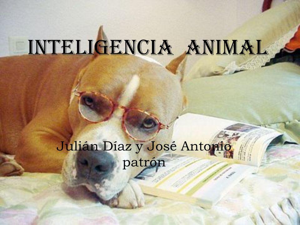 Julián Díaz y José Antonio patrón