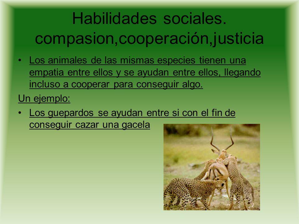 Habilidades sociales. compasion,cooperación,justicia