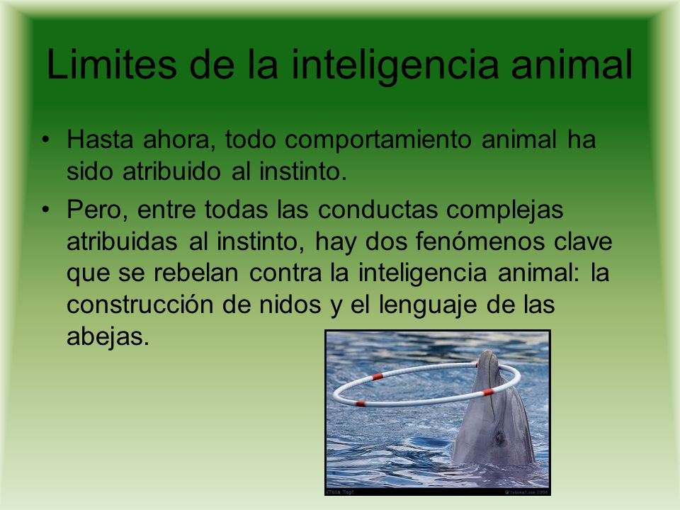 Limites de la inteligencia animal