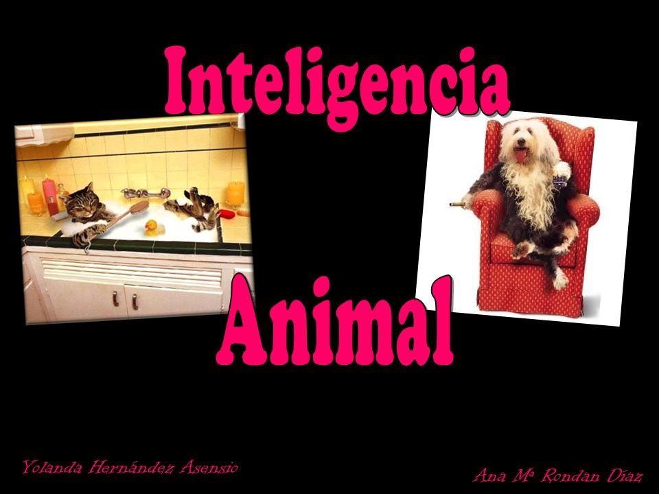 Inteligencia Animal Yolanda Hernández Asensio Ana Mª Rondan Díaz