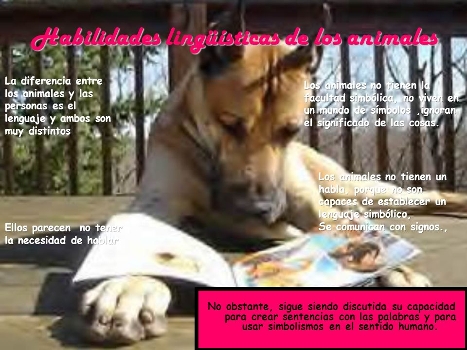 Habilidades lingüísticas de los animales