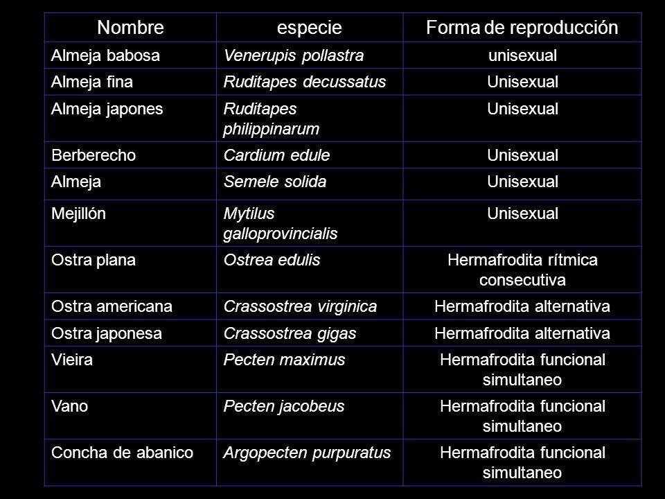 Nombre especie Forma de reproducción Almeja babosa Venerupis pollastra
