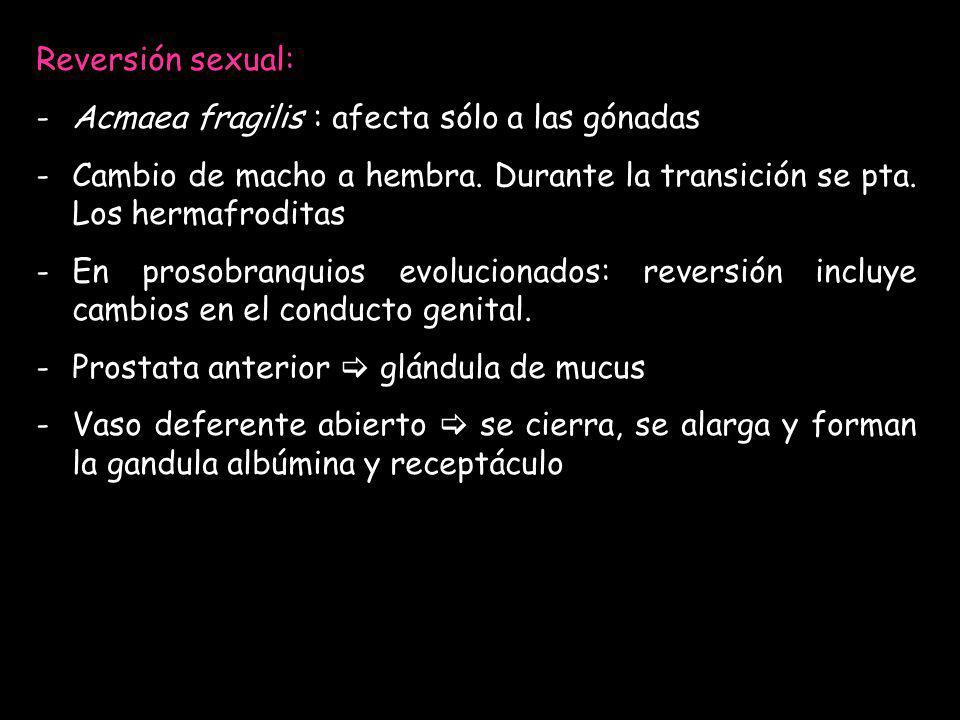 Reversión sexual: Acmaea fragilis : afecta sólo a las gónadas. Cambio de macho a hembra. Durante la transición se pta. Los hermafroditas.