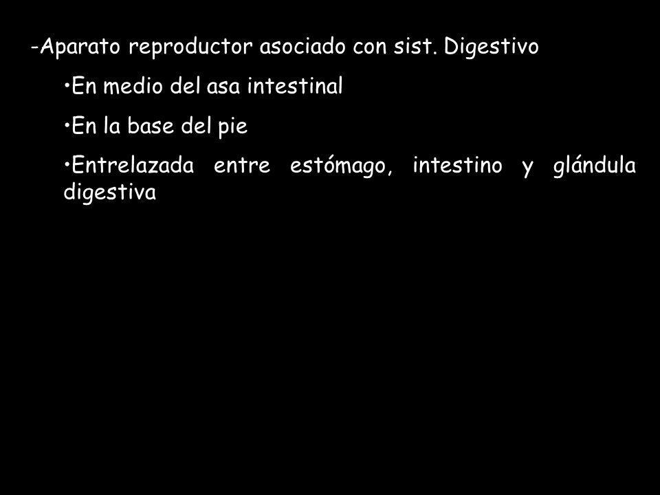Aparato reproductor asociado con sist. Digestivo