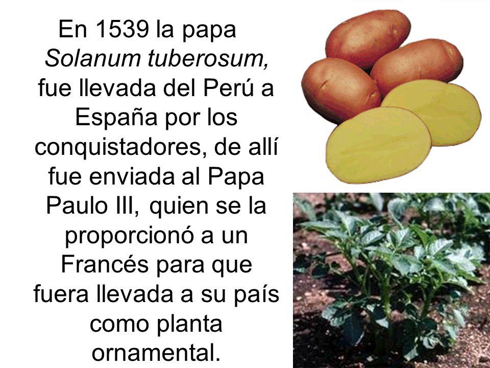 En 1539 la papa Solanum tuberosum, fue llevada del Perú a España por los conquistadores, de allí fue enviada al Papa Paulo III, quien se la proporcionó a un Francés para que fuera llevada a su país como planta ornamental.