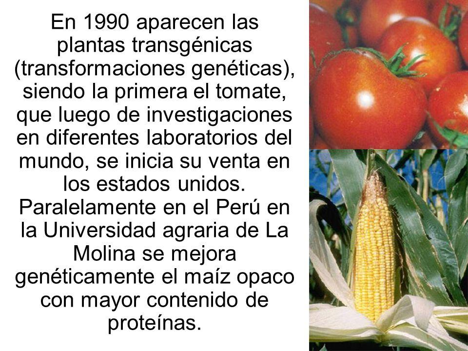 En 1990 aparecen las plantas transgénicas (transformaciones genéticas), siendo la primera el tomate, que luego de investigaciones en diferentes laboratorios del mundo, se inicia su venta en los estados unidos.