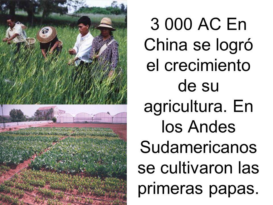 3 000 AC En China se logró el crecimiento de su agricultura