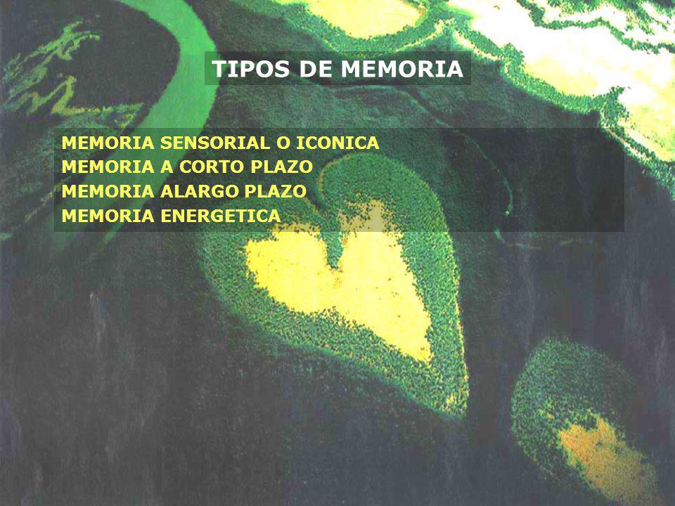 TIPOS DE MEMORIA MEMORIA SENSORIAL O ICONICA MEMORIA A CORTO PLAZO