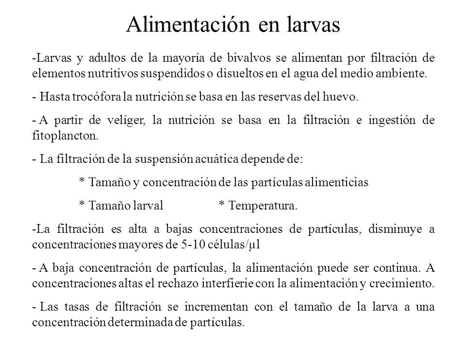 Alimentación en larvas