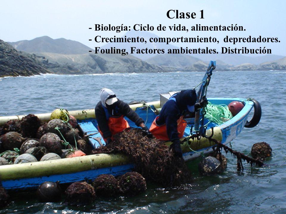 Clase 1 - Biología: Ciclo de vida, alimentación.