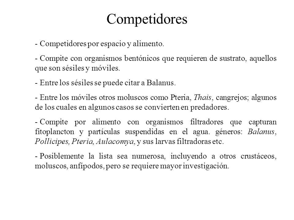 Competidores Competidores por espacio y alimento.