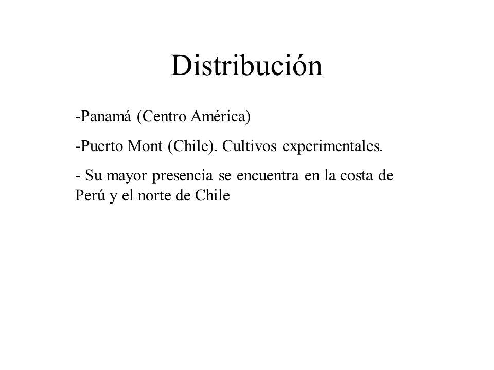 Distribución Panamá (Centro América)