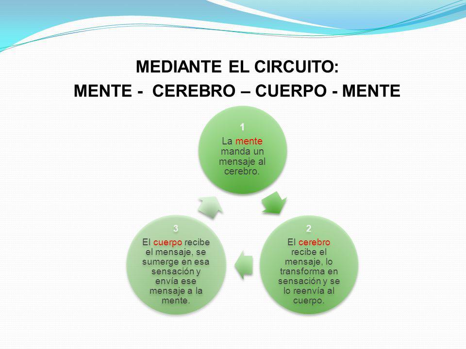 MEDIANTE EL CIRCUITO: MENTE - CEREBRO – CUERPO - MENTE