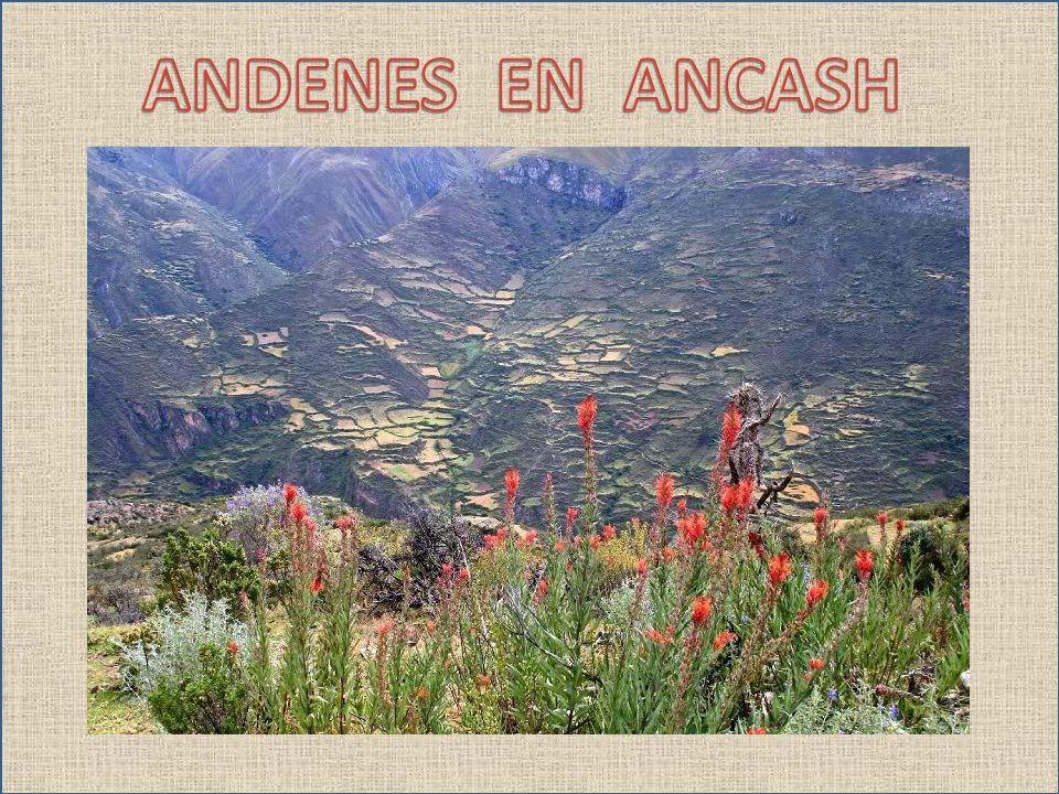 ANDENES EN ANCASH