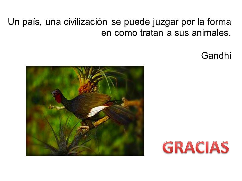 Un país, una civilización se puede juzgar por la forma en como tratan a sus animales. Gandhi