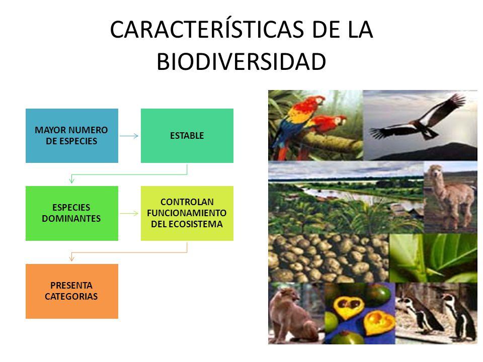 CARACTERÍSTICAS DE LA BIODIVERSIDAD