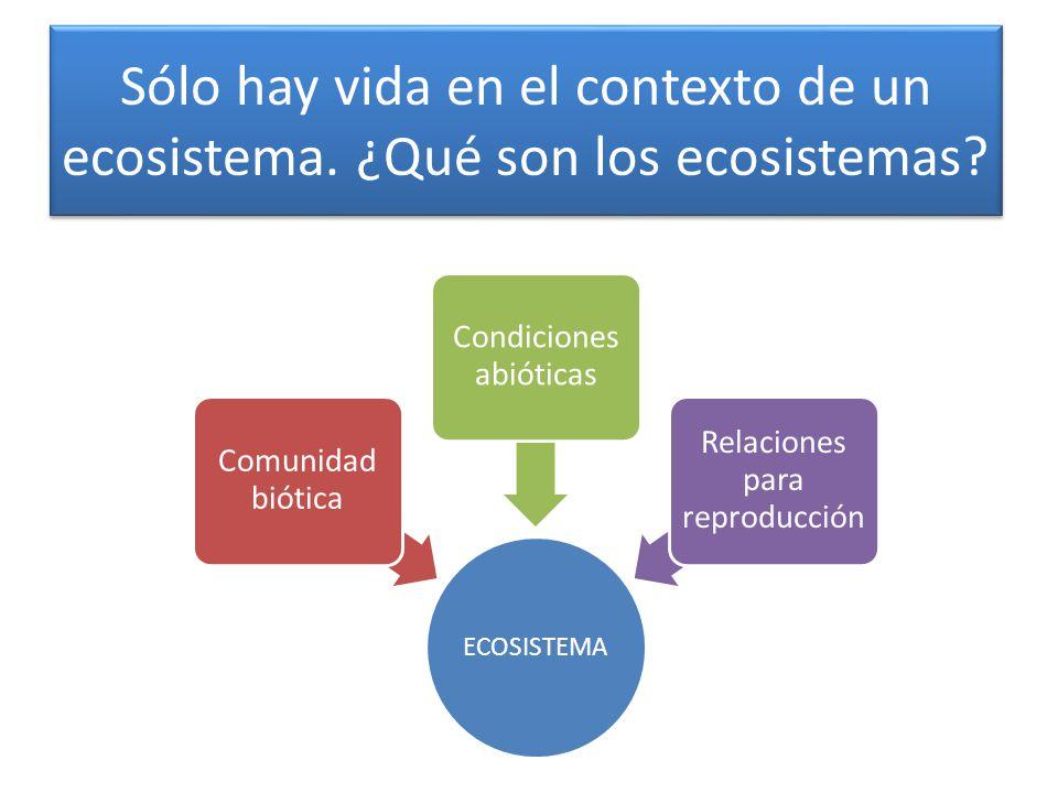 Sólo hay vida en el contexto de un ecosistema. ¿Qué son los ecosistemas