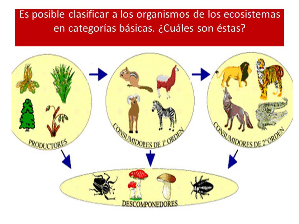 Es posible clasificar a los organismos de los ecosistemas en categorías básicas. ¿Cuáles son éstas