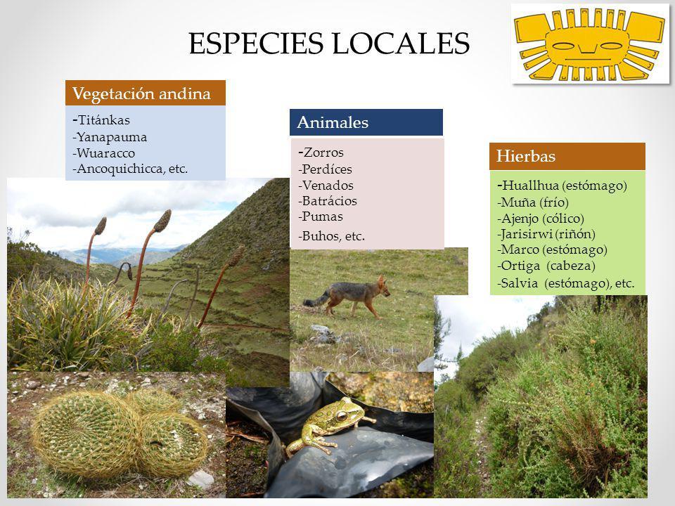 ESPECIES LOCALES Vegetación andina -Titánkas Animales lugareños