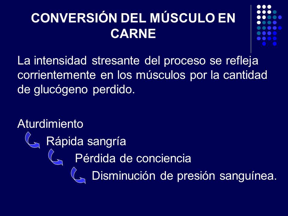CONVERSIÓN DEL MÚSCULO EN CARNE