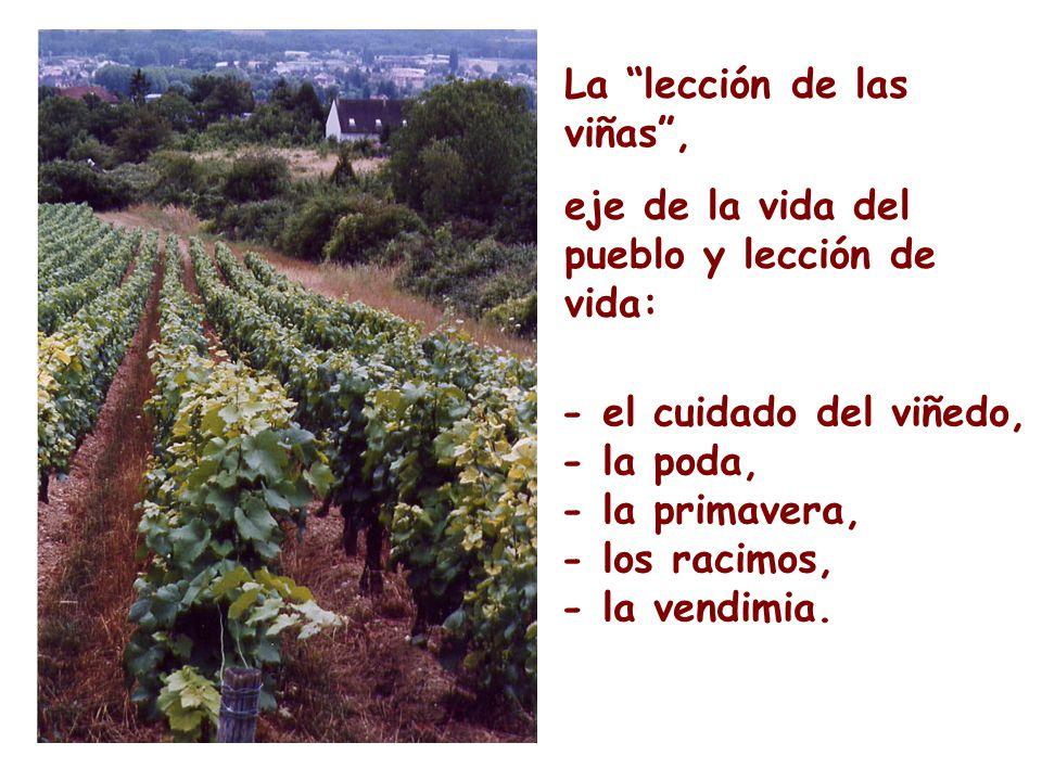 La lección de las viñas ,