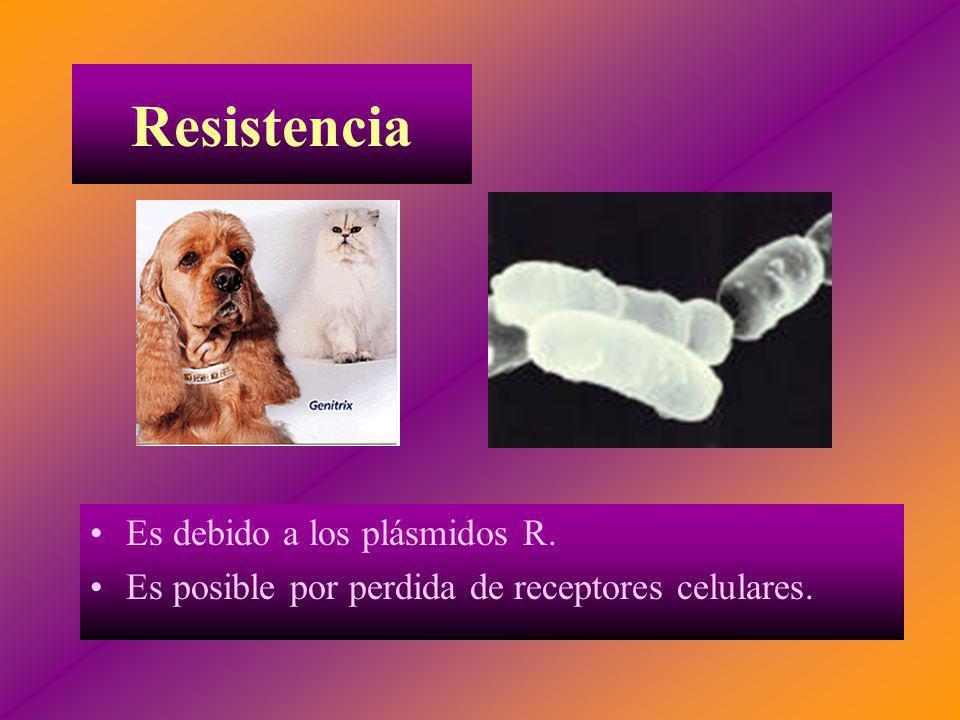 Resistencia Es debido a los plásmidos R.