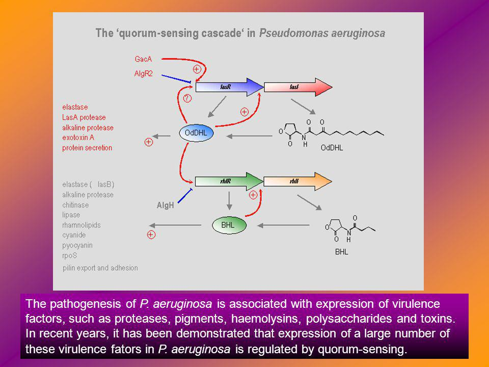 The pathogenesis of P.