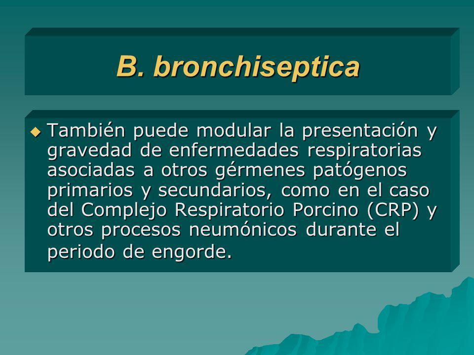 B. bronchiseptica