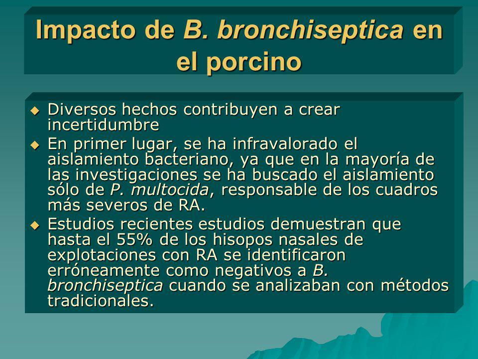 Impacto de B. bronchiseptica en el porcino