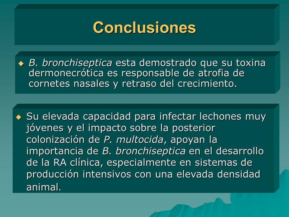 Conclusiones B. bronchiseptica esta demostrado que su toxina dermonecrótica es responsable de atrofia de cornetes nasales y retraso del crecimiento.