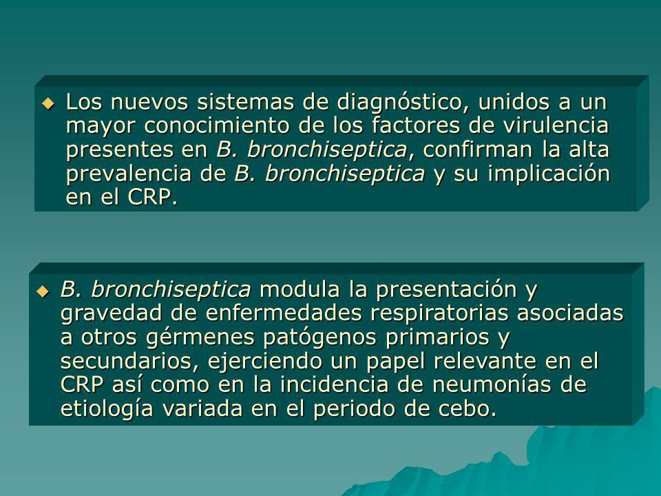 Los nuevos sistemas de diagnóstico, unidos a un mayor conocimiento de los factores de virulencia presentes en B. bronchiseptica, confirman la alta prevalencia de B. bronchiseptica y su implicación en el CRP.