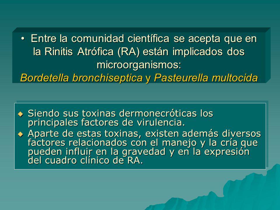Entre la comunidad científica se acepta que en la Rinitis Atrófica (RA) están implicados dos microorganismos: Bordetella bronchiseptica y Pasteurella multocida