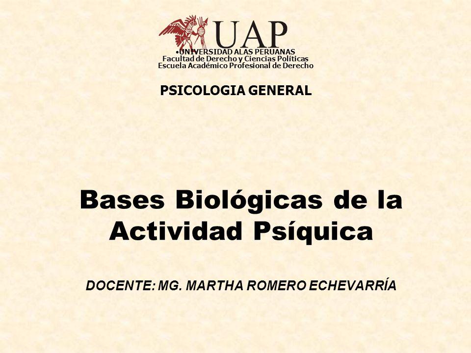 UNIVERSIDAD ALAS PERUANAS Facultad de Derecho y Ciencias Políticas Escuela Académico Profesional de Derecho
