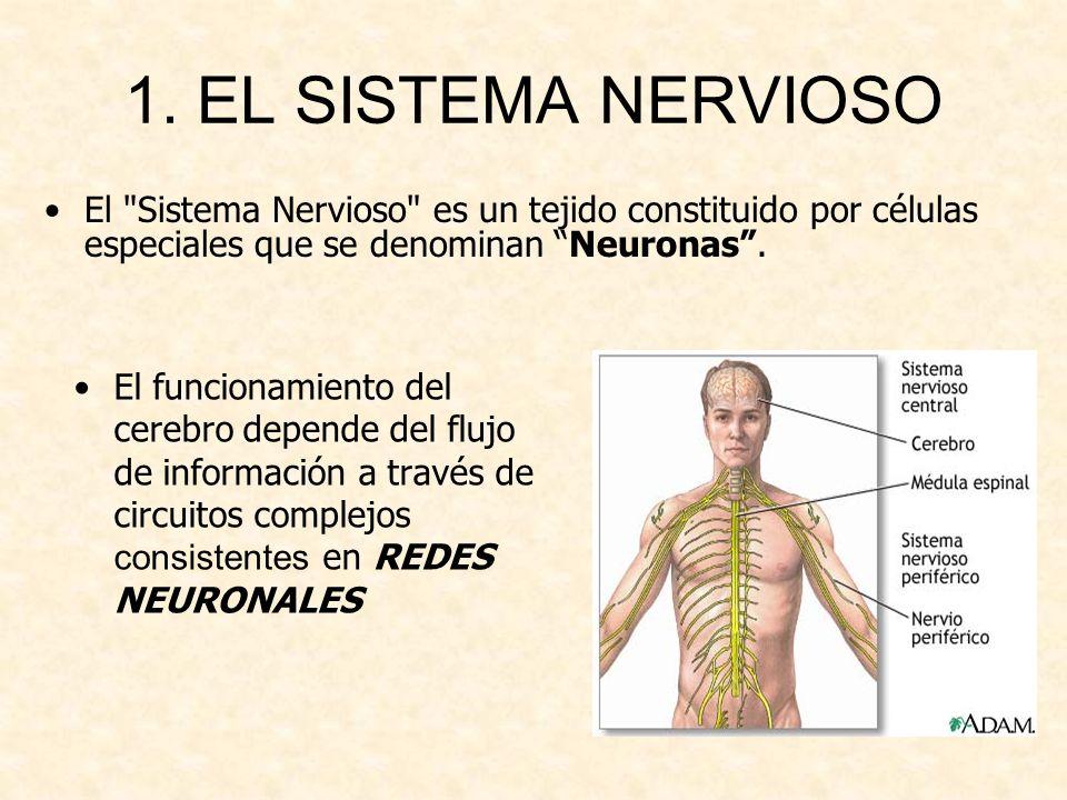 1. EL SISTEMA NERVIOSO El Sistema Nervioso es un tejido constituido por células especiales que se denominan Neuronas .