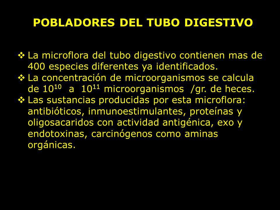 POBLADORES DEL TUBO DIGESTIVO