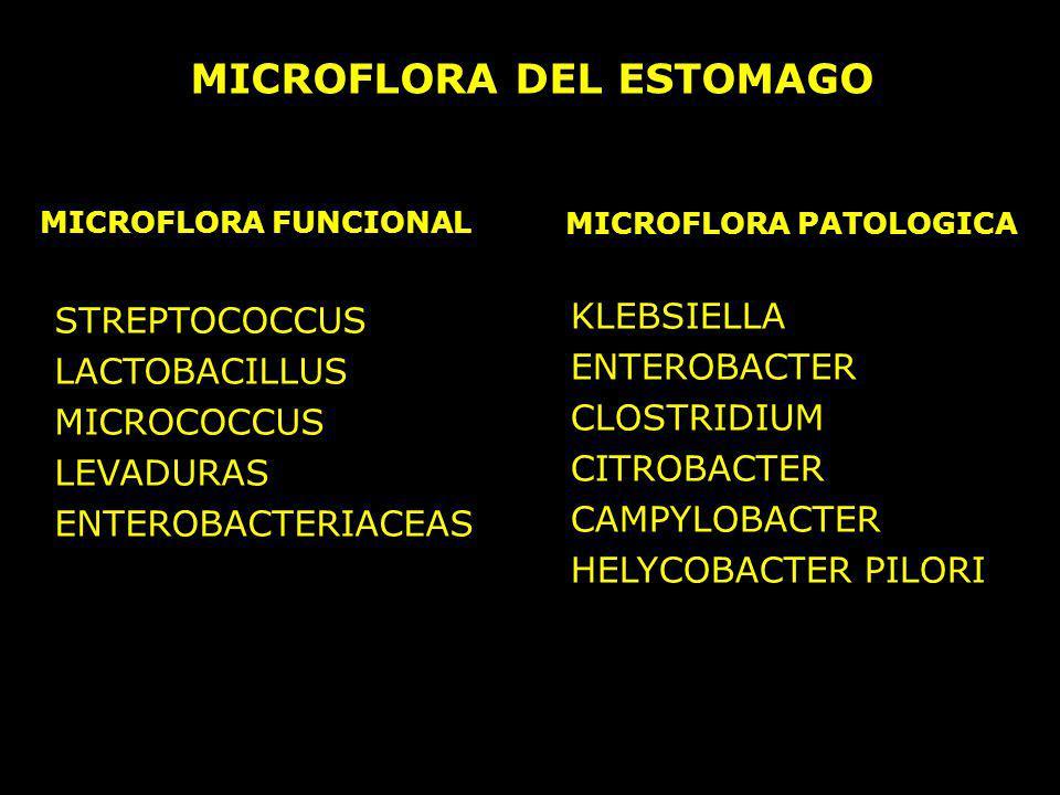 MICROFLORA DEL ESTOMAGO