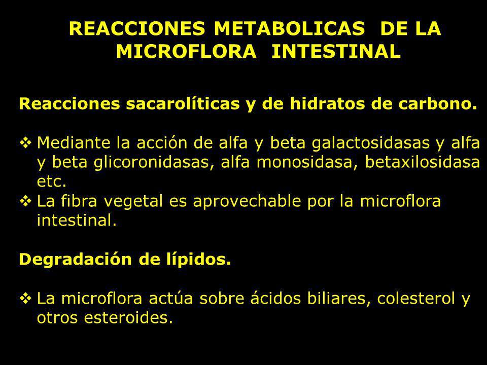 REACCIONES METABOLICAS DE LA MICROFLORA INTESTINAL