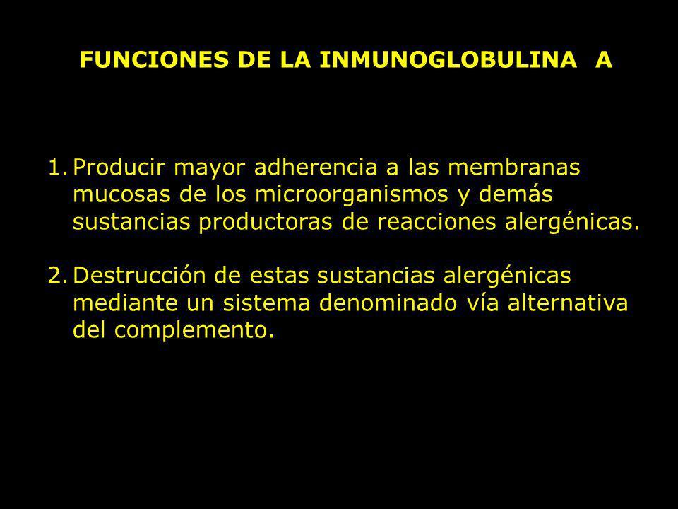 FUNCIONES DE LA INMUNOGLOBULINA A