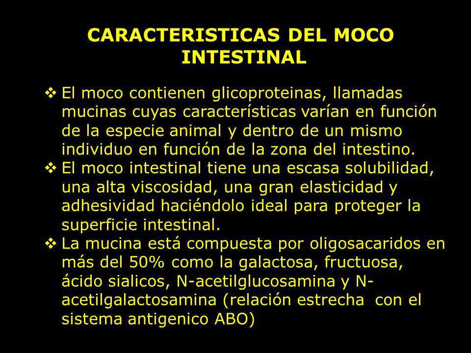 CARACTERISTICAS DEL MOCO