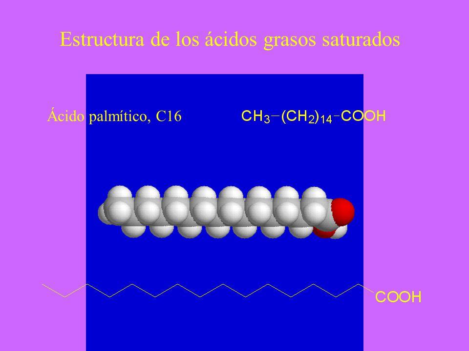 Estructura de los ácidos grasos saturados