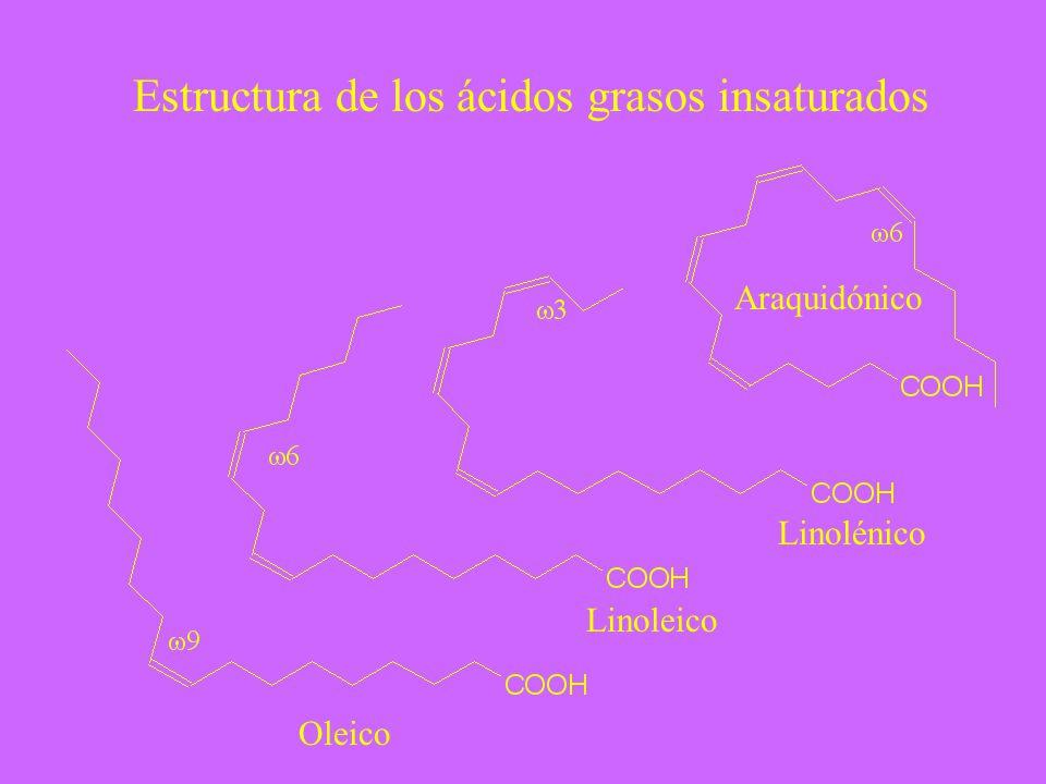 Estructura de los ácidos grasos insaturados